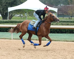 Solomini trains March 16 at Oaklawn Park