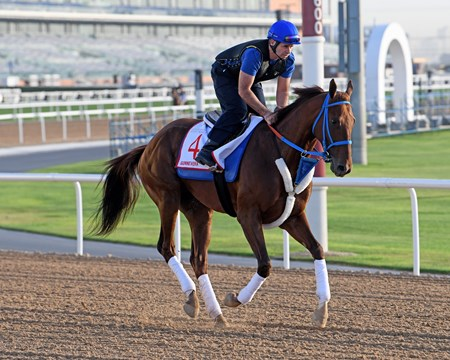 Gunnevera, Dubai World Cup entrant, Dubai World Cup 2018, Meydan UAE, photo by Mathea Kelley, 3/25/18