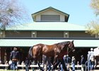 A horse passes the pavilion at the OBS March sale