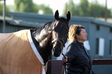 Midnight Bisou will be trainer Bill Spawr's first runner in the Kentucky Oaks