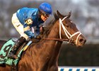 Enticed cruises home in the Gotham Stakes at Aqueduct Racetrack