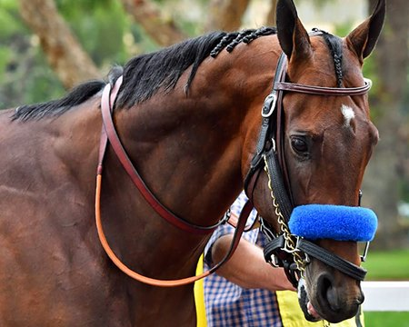 McKinzie has not raced since being disqualified to second for interference in the March 10 San Felipe Stakes (G2)