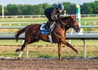 Sadler's Joy works at Palm Meadows Training Center
