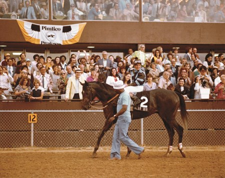 Spectacular Bid before the 1979 Preakness Stakes
