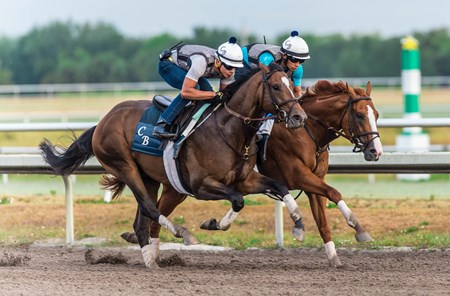 Good Magic (inside) in company with Mask - Palm Meadows, March 31, 2018