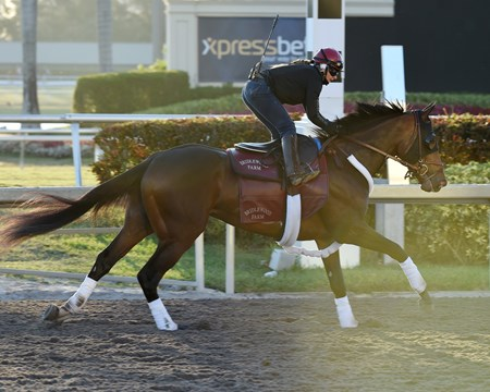Catholic Boy - Gulfstream, March 23, 2018