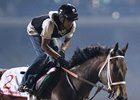 Forever Unbridled gallops at Meydan