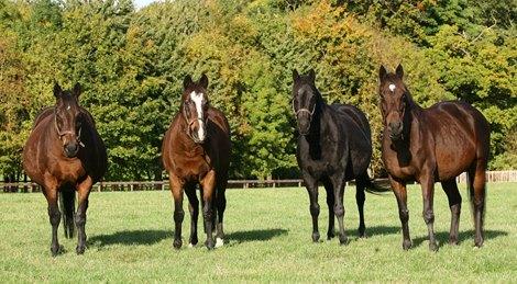 Royal Blue Hen Mare Hasili Dies At 27 Bloodhorse