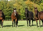Hasili and her group 1-winning daughters: (L-R) Banks Hill, Hasili, Heat Haze, and Intercontinental