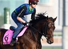 Seahenge gallops at Meydan