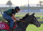 Vazirabad gallops at Meydan