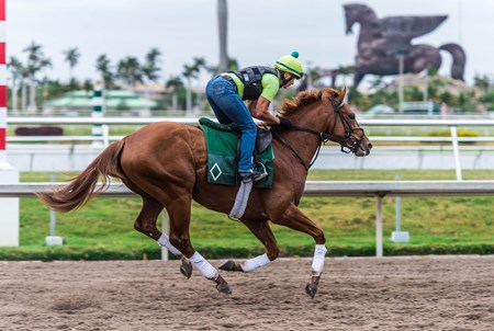 Hofburg - Gulfstream Park, March 29, 2018
