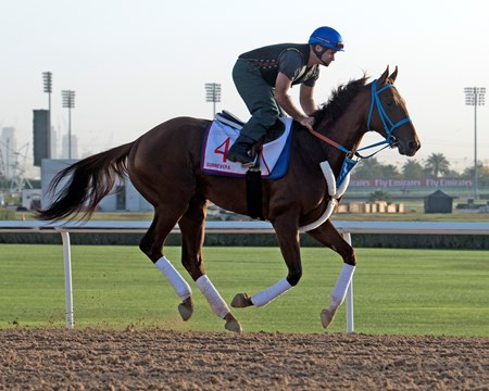 Gunnevera, Dubai World Cup, Dubai World Cup 2018, Meydan UAE, photo by Mathea Kelley, 3/26/18