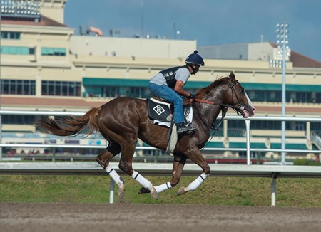 Free Drop Billy with Faustino Agar up @ Gulfstream Park. March 2  2018