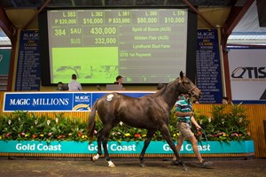 Lot 384, a filly by Spirit of Boom, brought AU$430,000 (US$331,282)