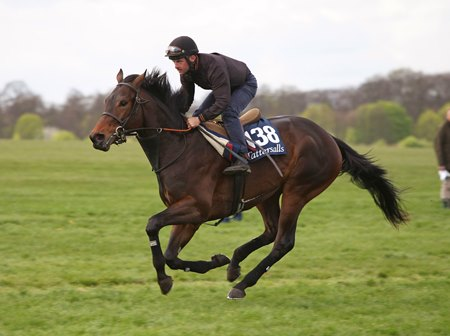Gronkowski gallops at the 2017 Tattersalls Craven breeze-up sale