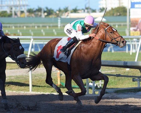 Maiden Winner Hofburg Joins Florida Derby Cast Bloodhorse