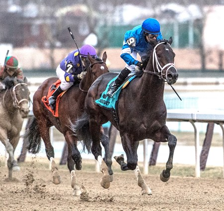 Enticed with jockey Junior Alvarado in the saddle cruises to the win in the 66th running of the Grade III Gotham Stakes at Aqueduct Saturday March 10, 2018 in Ozone Park, N.Y.