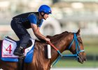 Gunnevera works ahead of the Dubai World Cup at Meydan Racecourse