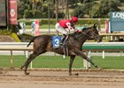 Midnight Bisou skips home in the slop to win the Santa Ysabel Stakes at Santa Anita Park