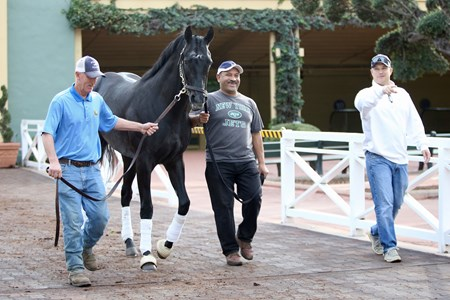 Lombo schooling, alongside Mike Pender 3-9-18 Free for BloodHorse Editorial usage based on editorial flat-rate assignment