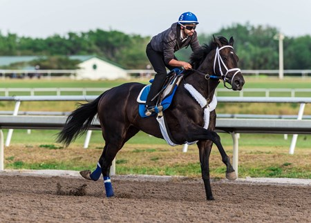 Enticed - Palm Meadows, March 21, 2018
