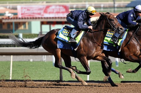 McKinzie - Santa Anita Park - March 4, 2018 Free for BloodHorse Editorial usage based on editorial flat-rate assignment