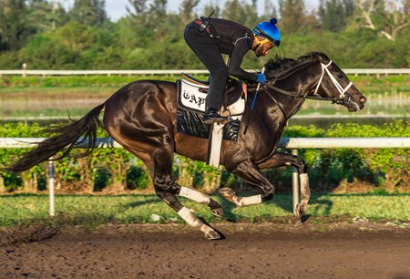 Always Dreaming - Palm Meadows, March 10, 2018