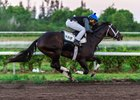 Always Dreaming in his final comeback work March 24 at Palm Beach Downs