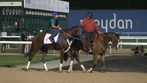 Dubai World Cup: Horses Training, March 28, 2018 Part 1