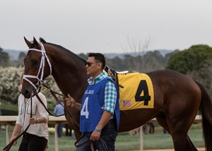 Magnum Moon before winning the Rebel Stakes at Oaklawn Park