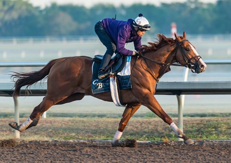 Good Magic - Palm Meadows, March 17, 2018
