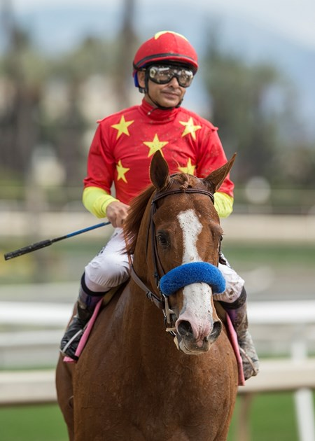 Justify - AOC Win, Santa Anita Park - March 11, 2018