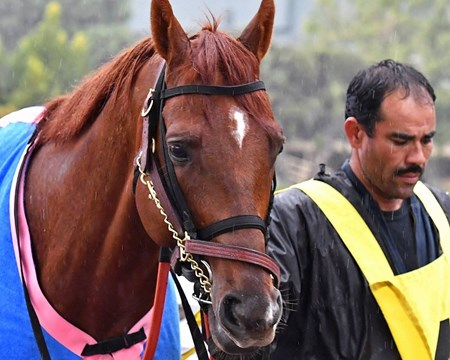 Giant Expectations - 2018 Santa Anita Handicap