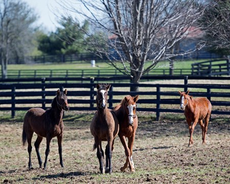 Will Take Charge — Stage Magic yearling colt (born 2017), second from right. Horses and scenes at John Gunther's Glennwood Farm Feb. 27, 2018 Glennwood Farm in Versailles, Kentucky.