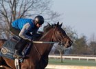 Quip galloping at Keeneland April 5