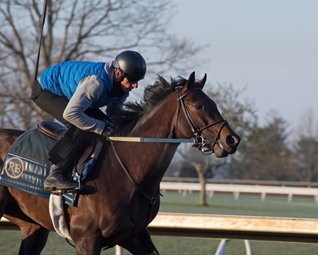 Rodolphe Brisset on Quip 