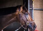 WinStar Farm and Repole Stable's Noble Indy is on track for his start in the Belmont Stakes