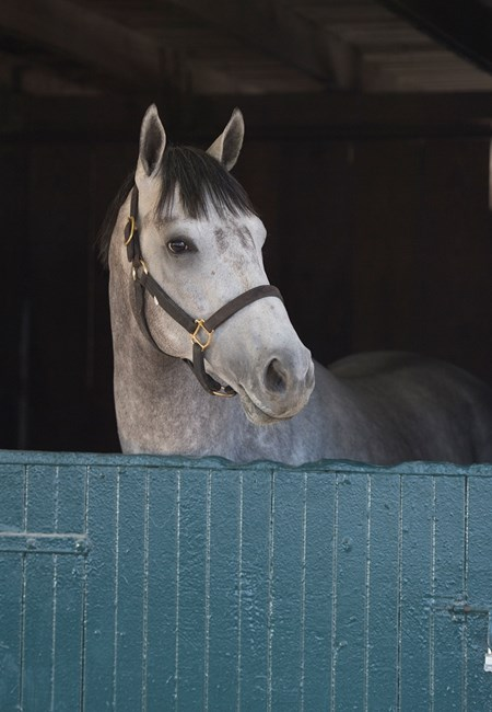 Greyvitos Morning training at Keeneland on April 12, 2018 Keeneland in Lexington, Ky.