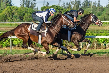 Noble Indy - Palm Beach Downs, March 10, 2018