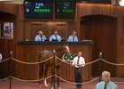 Hip 726 is a homebred Giant's Causeway colt that Off the Hook sold to Phoenix Thoroughbreds for $625,000