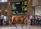 Lot 32, a filly by Snitzel, topped Day 1 of the Inglis Easter yearling sale