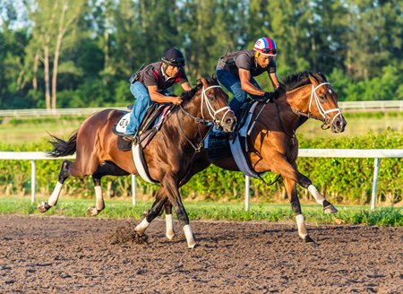 Audible (inside) works in company with You're to Blame April 13 at Palm Beach Downs