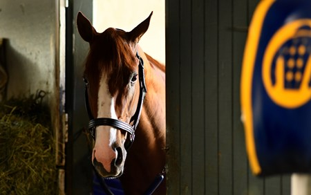 Justify in his stall at Santa Anita