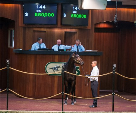 Hip 144, a colt by Strong Mandate, brought $550,000