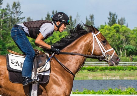 Audible - Palm Meadows - April 8, 2018