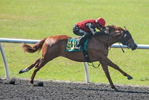 A Kantharos colt consigned as Hip 531 works April 18 at the Ocala Breeders' Sales spring sale