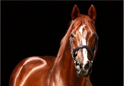 Giant S Causeway Dead At 21 Bloodhorse