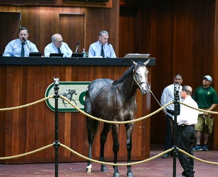Hip 352  Tapit-Flaming Heart   Sold $750.000 @ OBS in Ocala Fl  April 25 2108