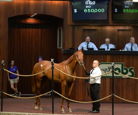 Owner Jeff Drown Gets Candy Ride Filly For 650k At Obs